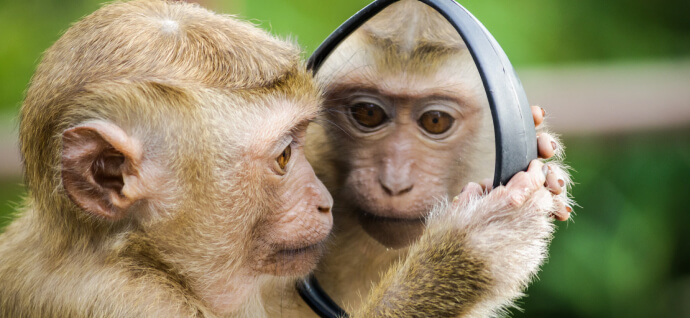 Monkey and the mirror
