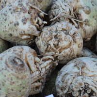Eat Celery Root picture