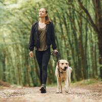 Walk My Dog picture