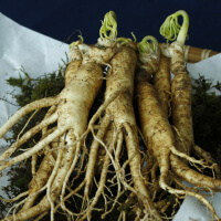 Take Ginseng picture